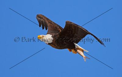 Eagles 1 133 edit 2