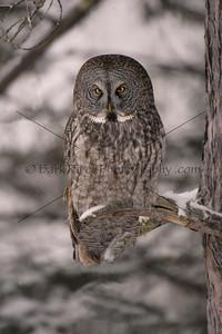 18 02 18_Owls Minn_0310 e