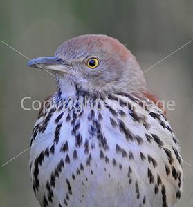 0910 Blue Birds253 e