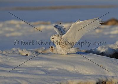 030610 FL Snowy D7153 e