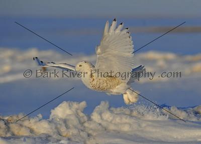 030610 FL Snowy D7154 e