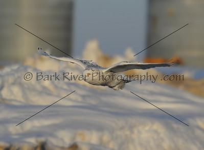 030610 FL Snowy D7144 e