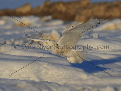 030610 FL Snowy D7148 e
