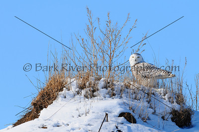 Snowy 4 184 edit