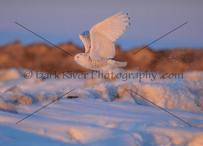 030610 FL Snowy D7258 e