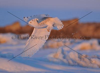030610 FL Snowy D7255 e