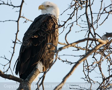 01/31/2010 Eagles