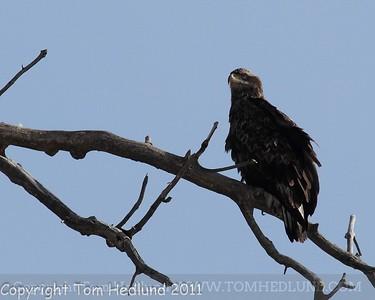 01/22/2011 Rockford Eagles