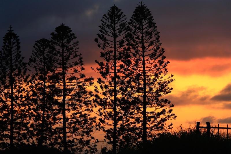 """Sunset Pines"""