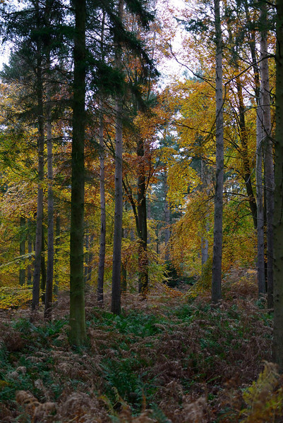 The Cumbrian forest in which red squirrels were photographed.
