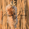 Reed Bunting russell finney photography (9)