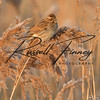 Reed Bunting russell finney photography (12)