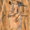 Reed Bunting russell finney photography (8)
