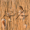 Reed Bunting russell finney photography (6)