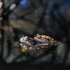 Erdkröte, Paarung, mit Reflexionen und Schatten von Zweigen im Wasser, Bufo bufo, Schönbuch, Bebenhausen, Deutschland