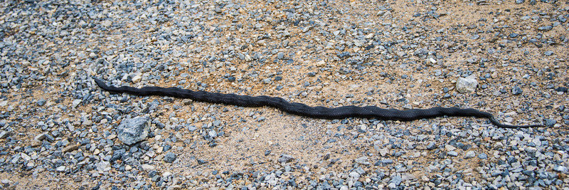 Snake in the yard