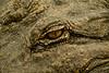 Gator eye.