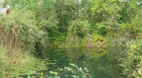 Ridgefield National Wildlife Refuge woods and wetlands