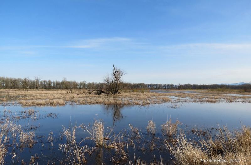 Ridgfield National Wildlife Refuge wetlands