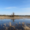 Ridgefield National Wildlife Refuge wetlands. Photographed 7 to 8 am. on April 7, 2012.