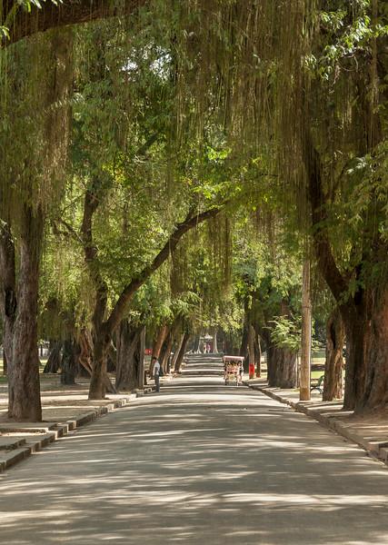 Rio de Janeiro 2013 - Quinta da Boa Vista