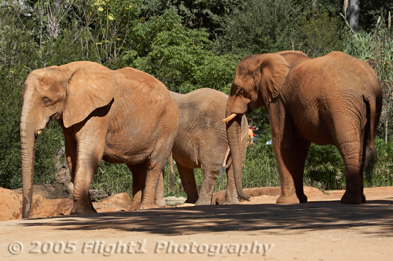 A group of three elephants