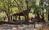 Chikoko camp South Luangwa