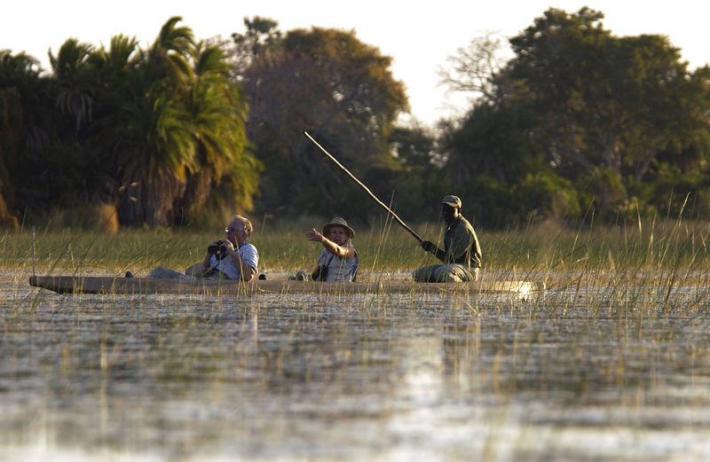 Mekoro paddling in the Okavango, Botswana