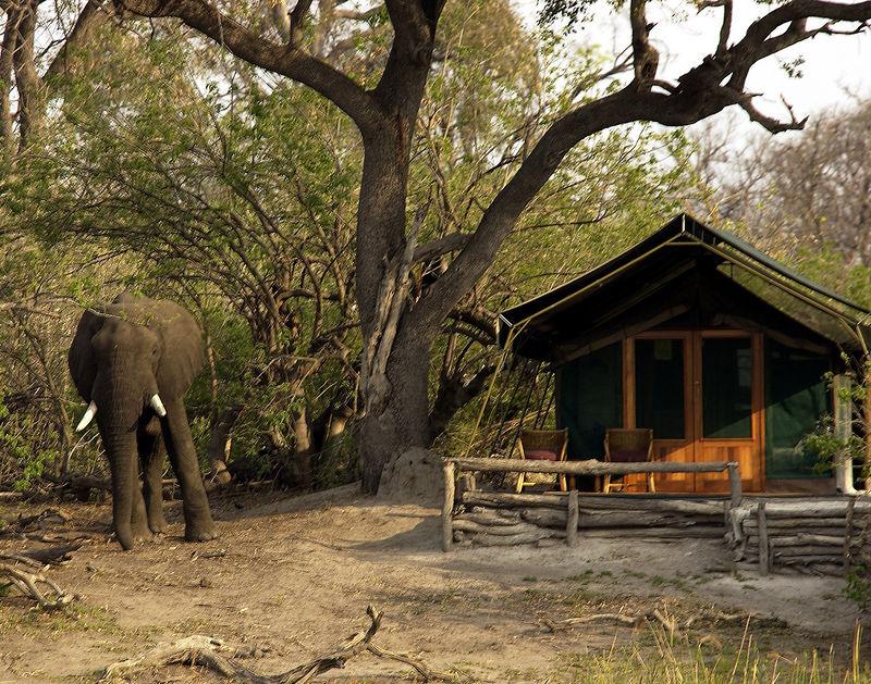 Elephant at tent Linyati camp Botswana