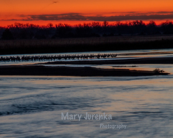 Sandhill Sunrise on Platte River in Nebraska