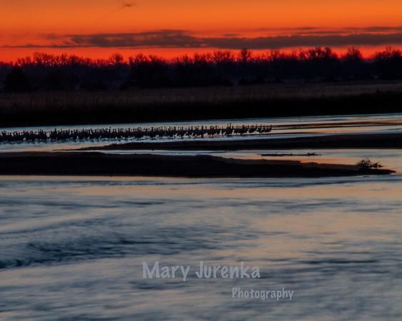Sandhill Sunrise on Platte River in Nebraska