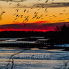 Sunset on the Platte River brings thousands of Sandhill Cranes to the sand bars.  At sunrise the cranes fly back to the fields and repeat this cycle each day. I took this shot from a bridge where hundreds of people gather for sunsets and sunrises during the March-April migration.