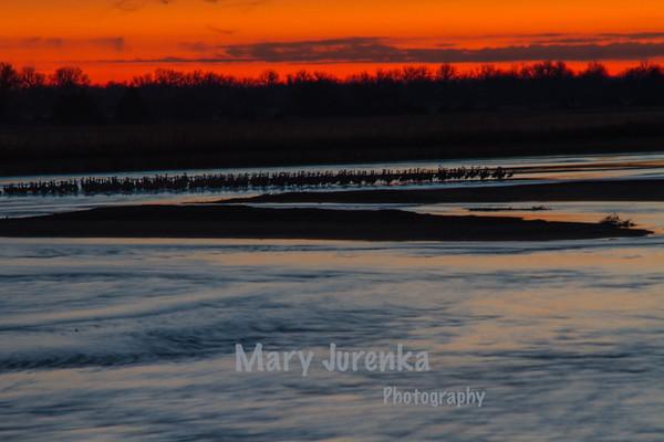 Sandhill Crane Sunrise on Nebraska's Platte River