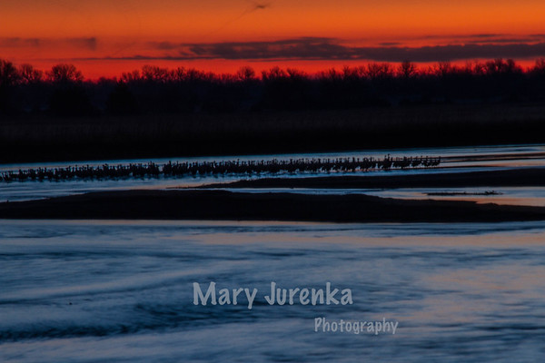 Sandhill Crane Sunrise on Platte River