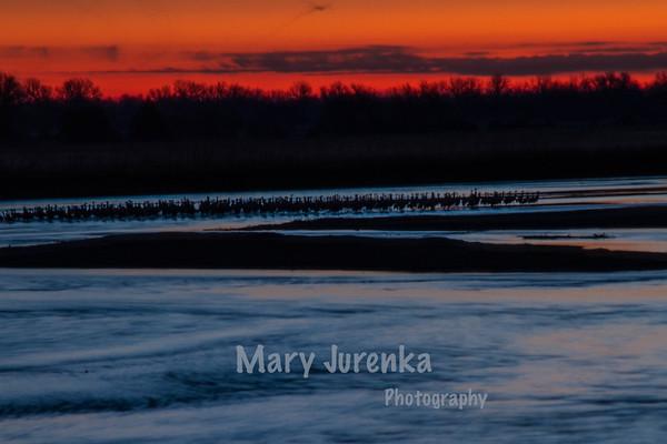 Sandhill Crane Sunrise on Platte River