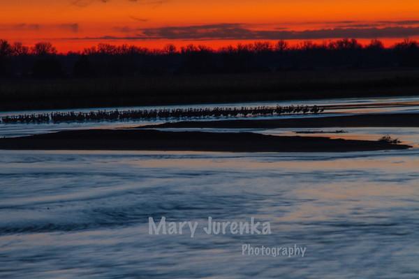 Sandhill Sunrise on Platte River