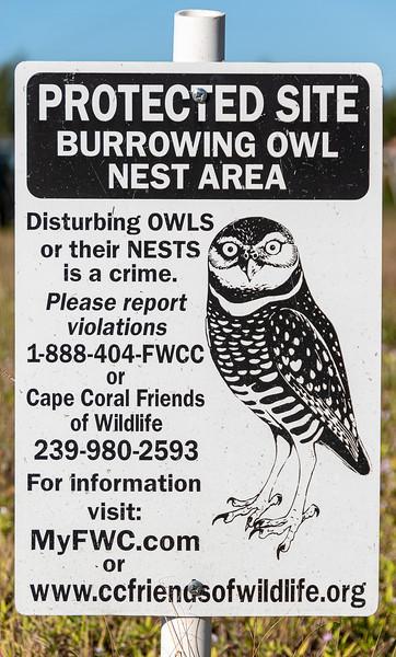 Burrowing Owl - Cape Coral, FL