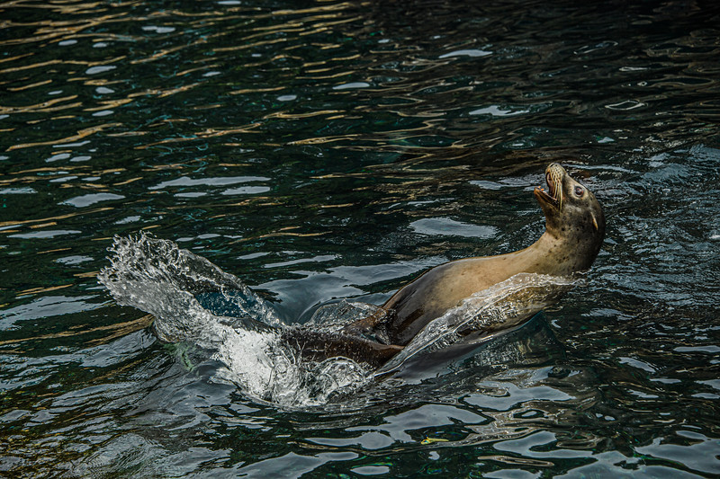 Sea Lions and Seals