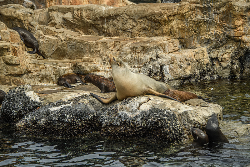 Seals and Sea Lions