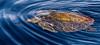 Gorda Banks - Sea of Cortez (AKA Gulf of California)