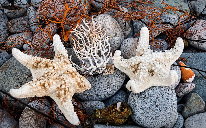 Isla Santa Catalina - Gulf of California (AKA Sea of Cortez)