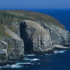 With miles of cliffs available to them, the gannets pick one place for thousands to nest.