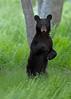 Shenandoah National Park 2014 :