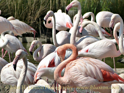 A visit to the Slimbridge Wildlife and Wetlands Centre on April 16, 2014 made during a cruise on the MV EDWARD ELGAR.