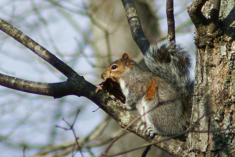 Squirrel 032005_0583