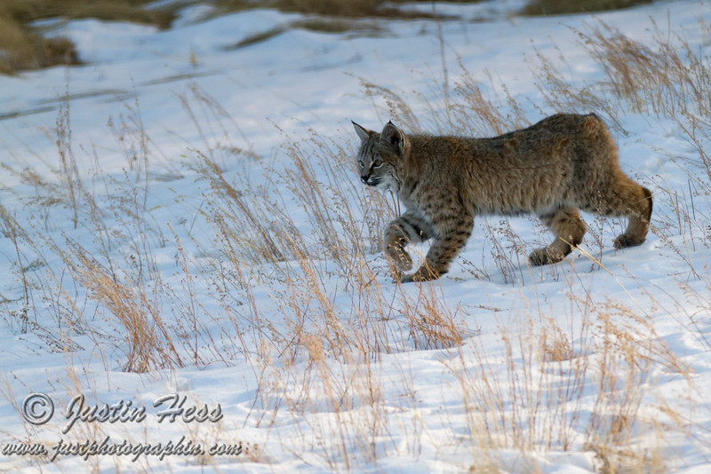 Focused Hunting