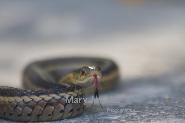Wildlife-Snake