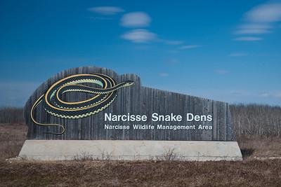 Narcisse Snake Dens, Manitoba, Canada