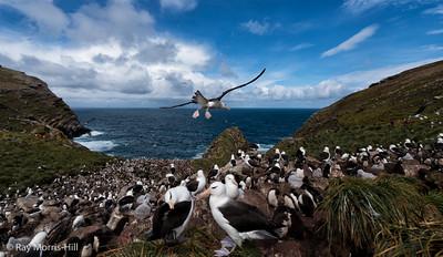 West Point, West Falklands