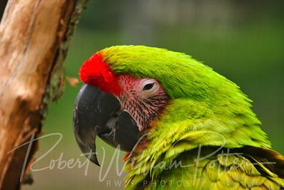 0831-Parrot
